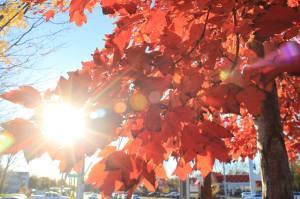 Autumn 2015 is still hanging on here in Louisville.